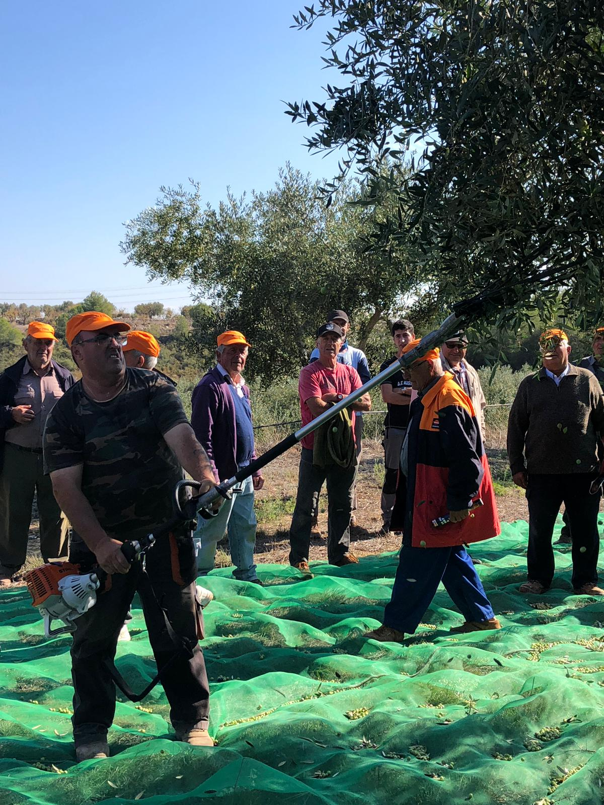 Demostració de màquines Stihl per a la collita de l'oliva